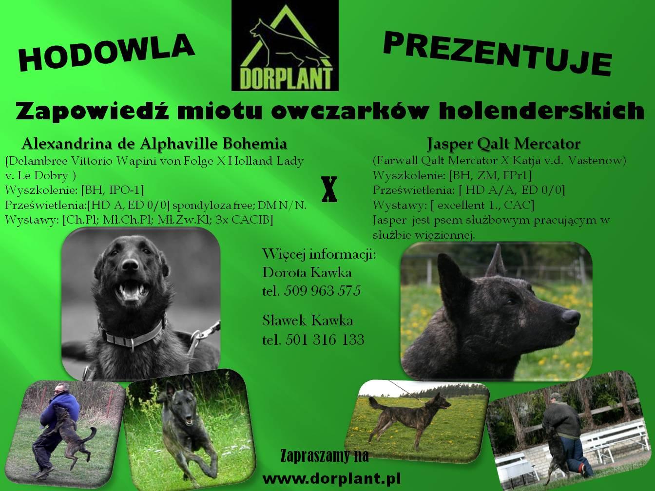 Plakat holendry 2aa PL